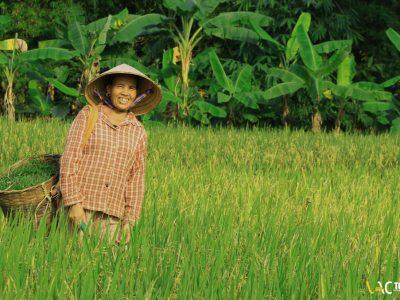 Circuit Rizières du Nord Vietnam