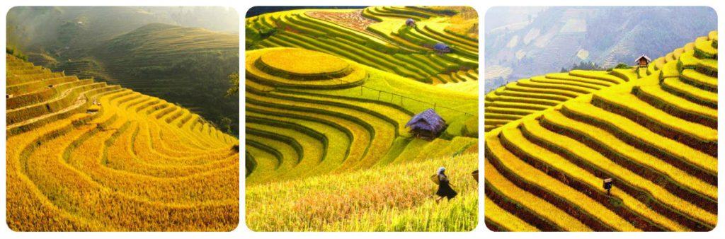 quand partir au vietnam - meilleure saison pour aller au vietnam
